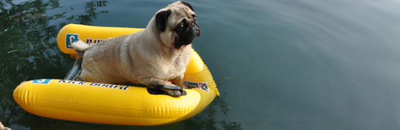 Surviving Summer: Pug Style!